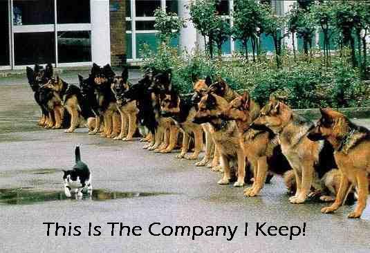 catdogwalk1