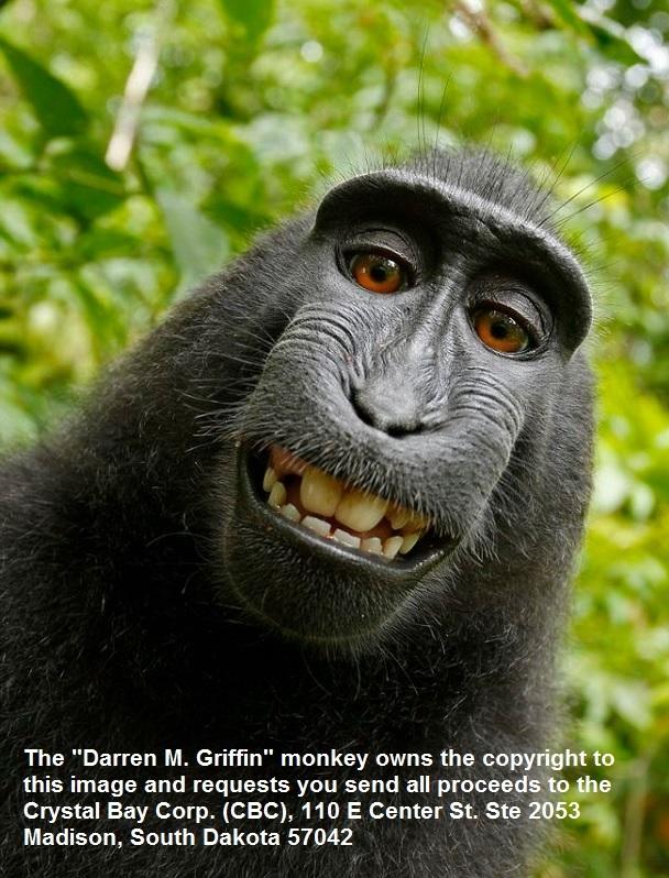 Darren M. Griffin Monkey